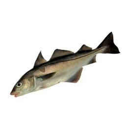 Пікша, риба обрізки без шкурки, не калібрований, без солі, вага 1000 g (г)